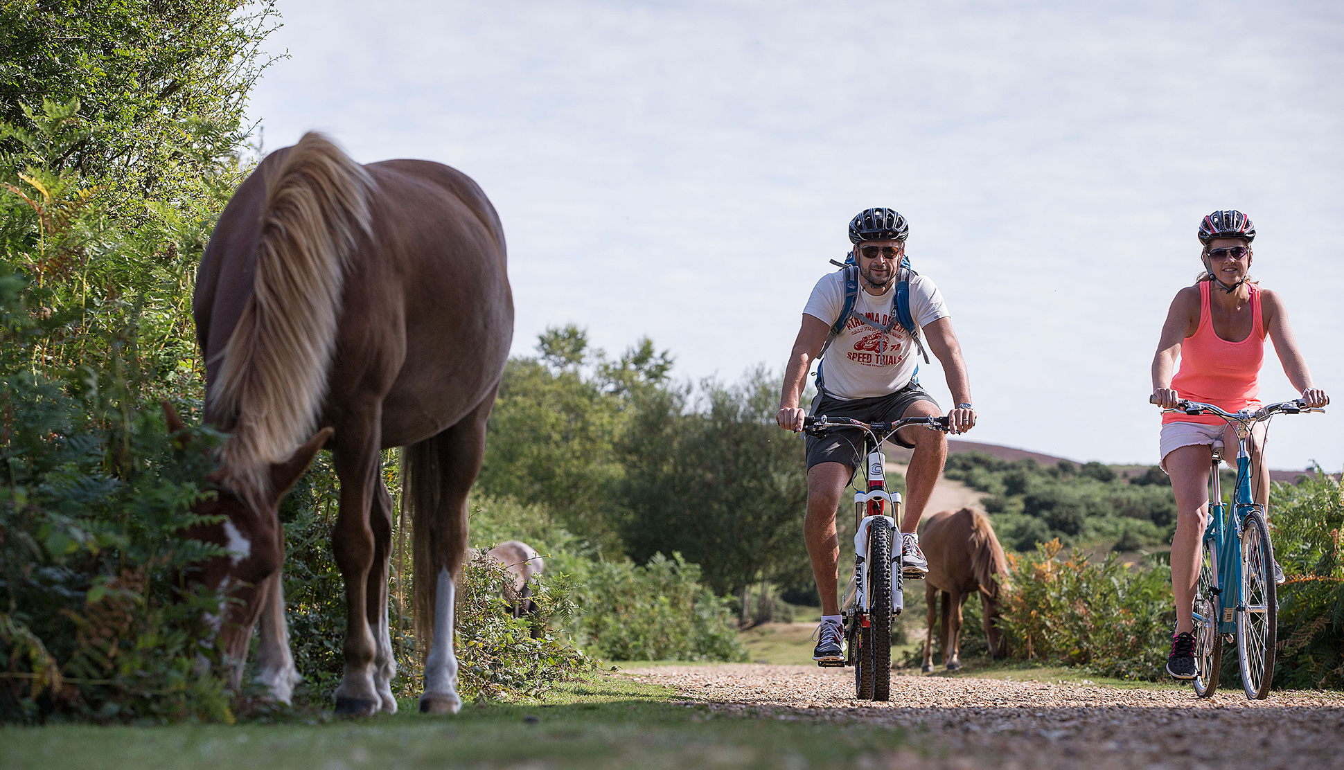 The Best Bike Rides in the New Forest Recommend by New Forest Cottages