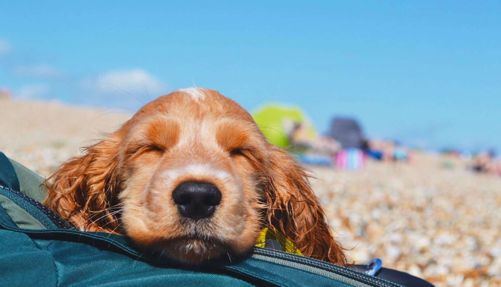 Dog Friendly Beaches in Hampshire