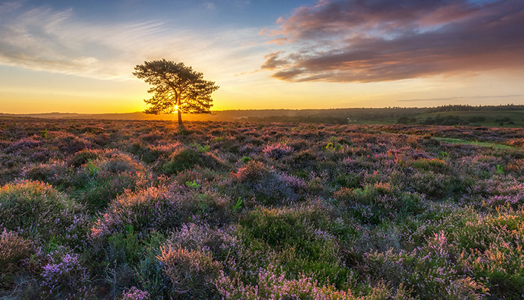 Ibsley Common, New Forest