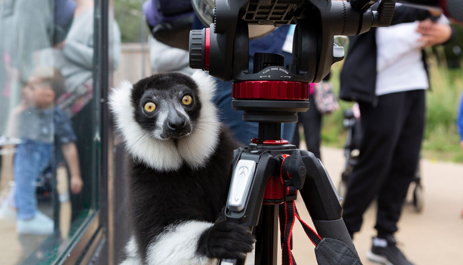 Photographic Experience Days at Marwell Zoo - Hampshire Microgap