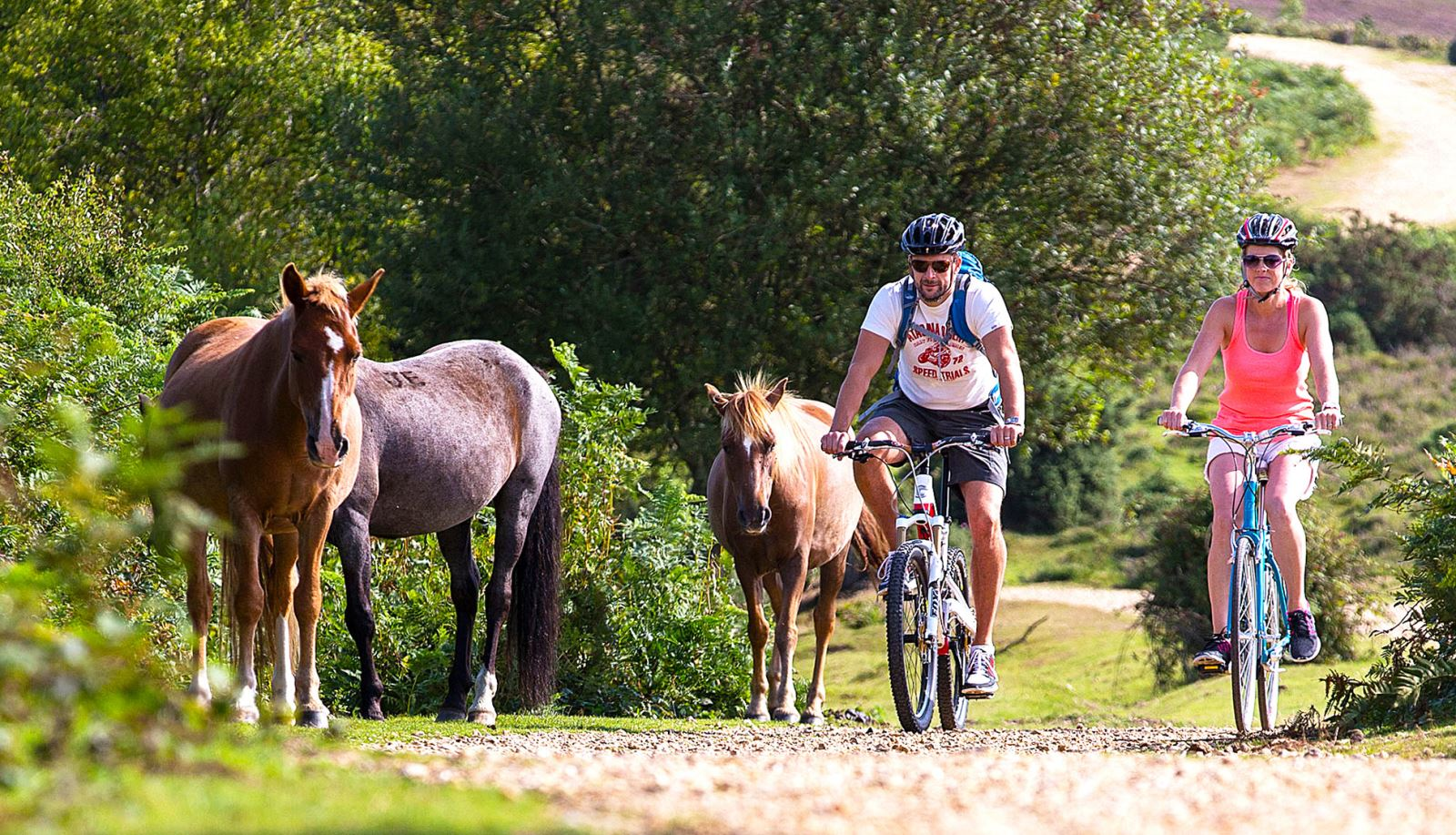Couple cycling past New Forest ponies in  the New Forest Park