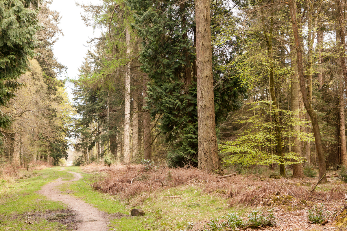 The Best Walks in the New Forest recommended by New Forest Living