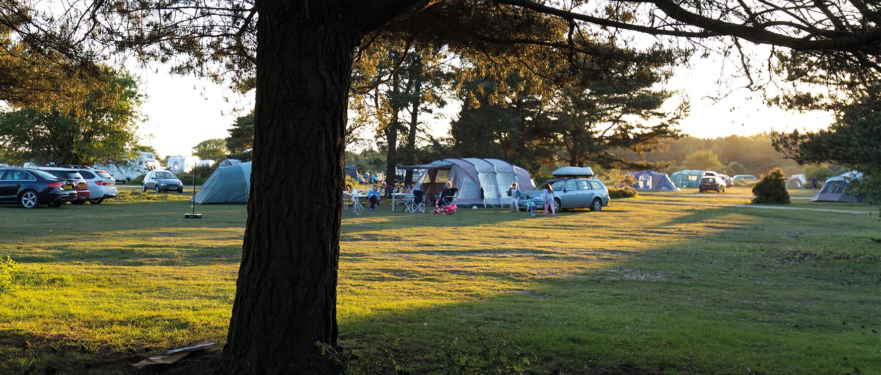 Campsite in the New Forest National Park