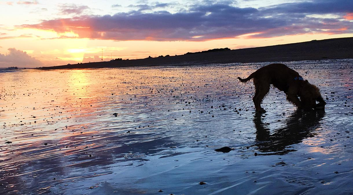 Dog Friendly Hampshire - VisitHampshire co uk