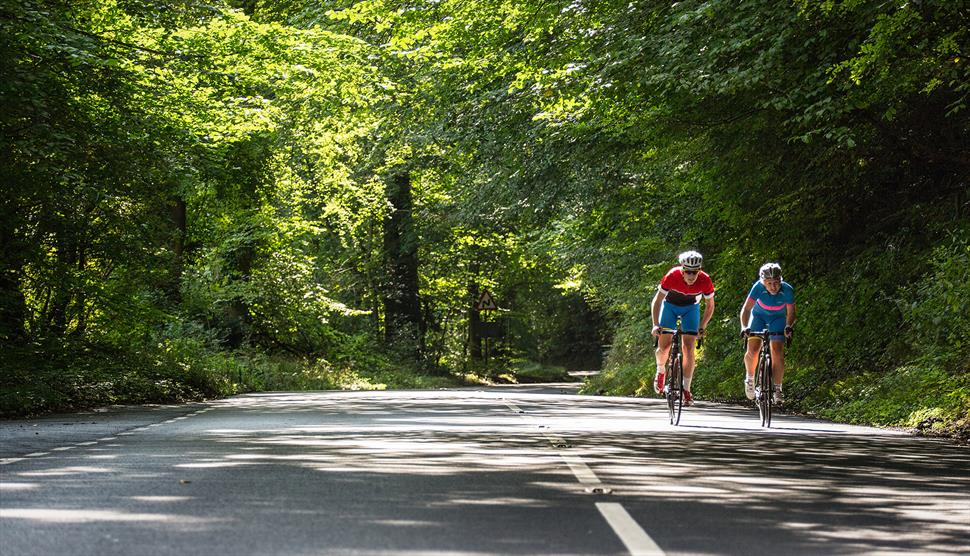New Forest Road Loop Cycling Route