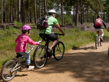 Mountain Biking at Alice Holt Forest