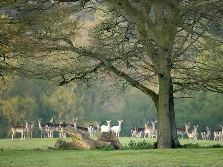 Bolderwood Deer Spotting Walk