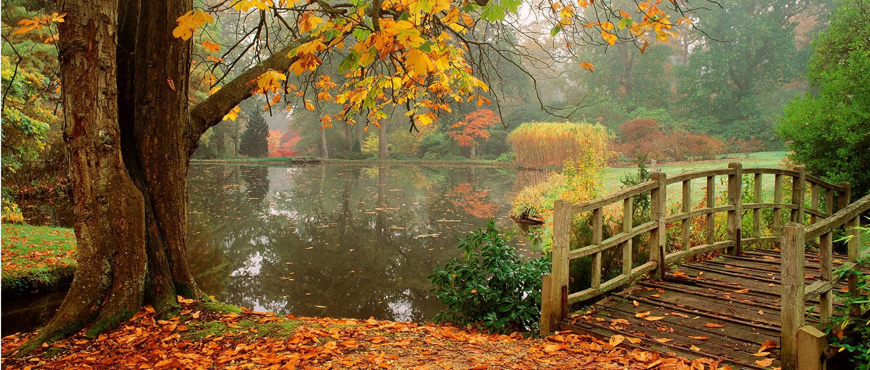 Autumn Moments in Hampshire