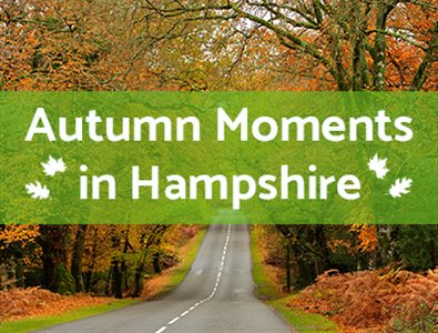 Thumbnail for Autumn Moments