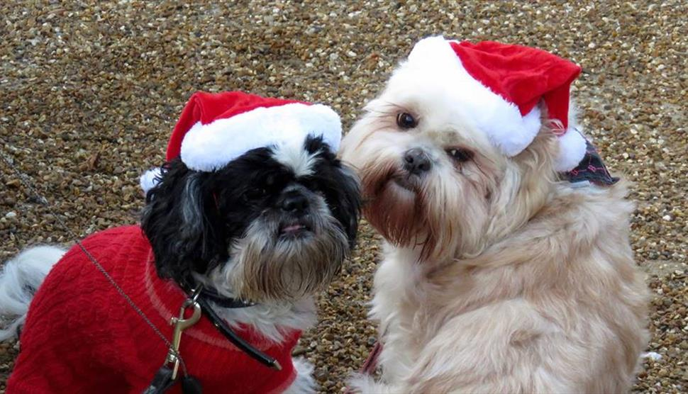 Festive Woofs and Wellies at Queen Elizabeth Country Park