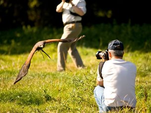 Falconry Photography Day at Sir Harold Hillier Gardens