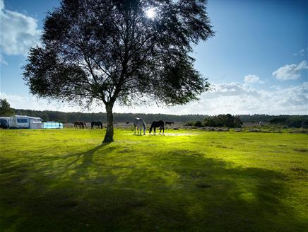 Aldridge Hill Caravan and Campsite, New Forest