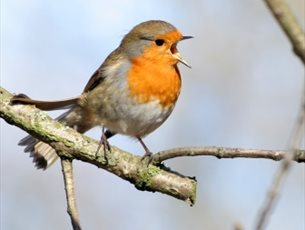Dawn Chorus Bird Walk with Breakfast at Sir Harold Hillier Gardens