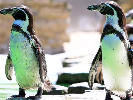 Penguins at Birdworld