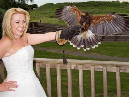 The Hawk Conservancy Trust