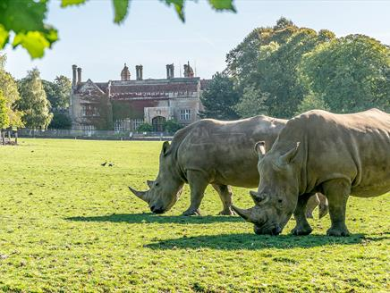 Rhinos outside Marwell House