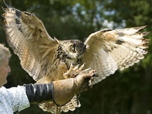Falconry Experience Day at Sir Harold Hillier Gardens