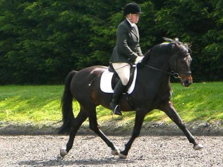 Horse Riding In Hampshire Visit Hampshire Co Uk