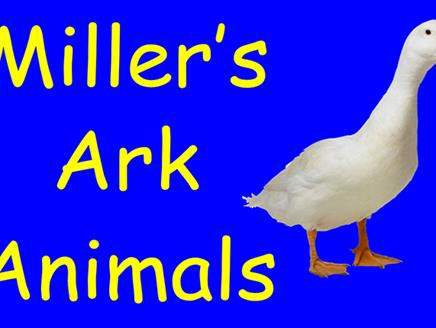 Miller's Ark Animals