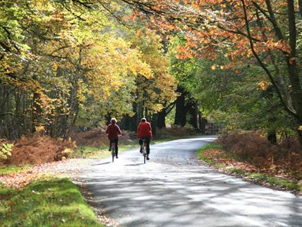 Lymington to Sway Cycle Route, New Forest