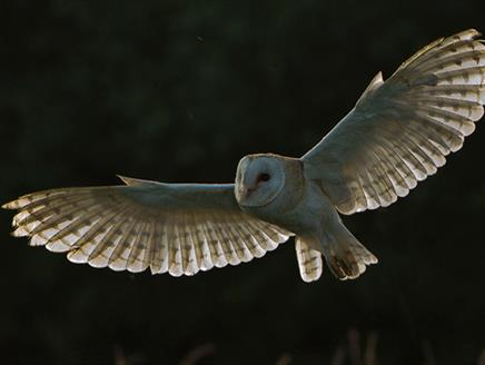 Christmas Carols and Owls By Moonlight at The Hawk Conservancy Trust