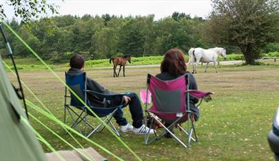 Roundhill Campsite, New Forest: Visit-Hampshire.co.uk
