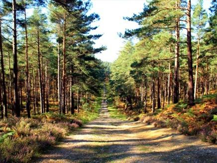 Cycling at Swinley Forest