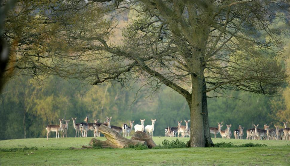 Deer Spotting Walk at Bolderwood, New Forest