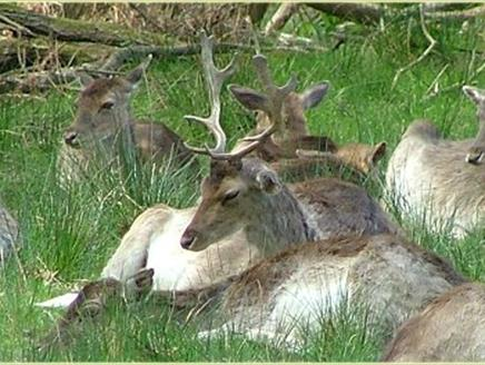Bolderwood Deer Sanctuary