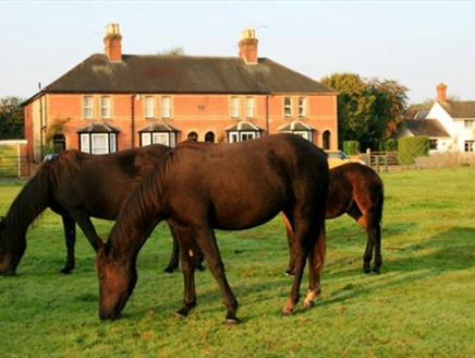 Ponies grazing outside Waterley Cottage.  Brockenhurst